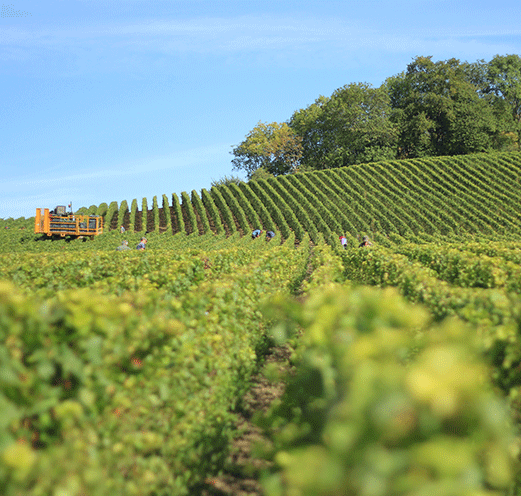 Vindependents Wine Suppliers in Austria