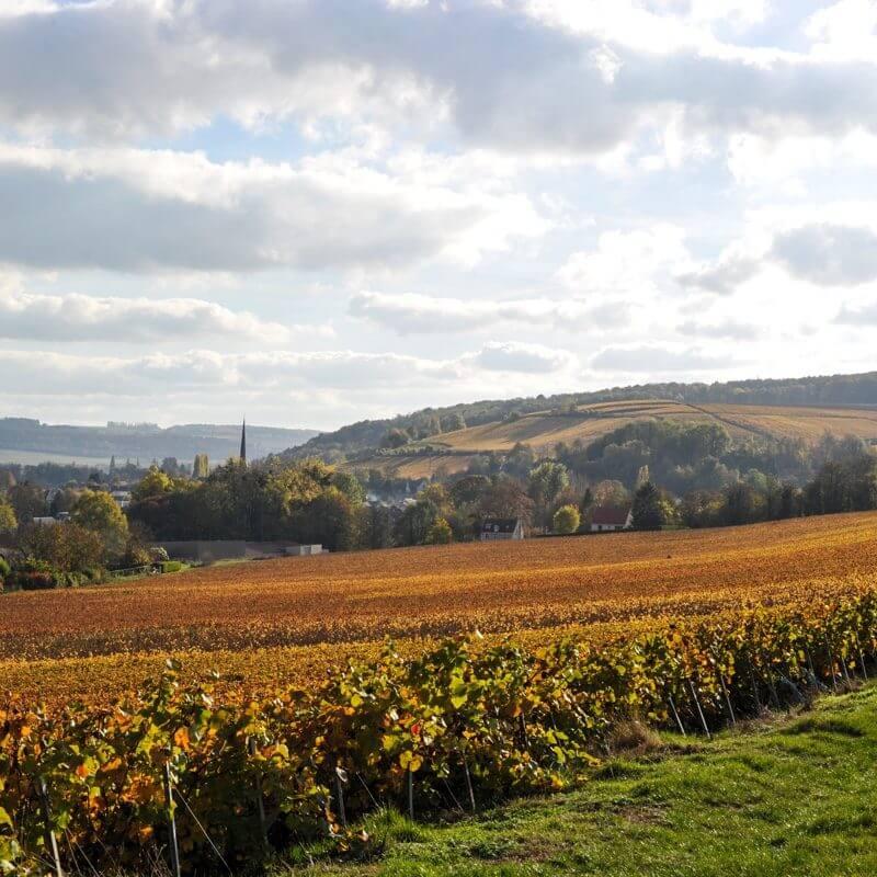 Vindependents Wine Suppliers in Austria